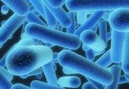 Legionella Water Treatment